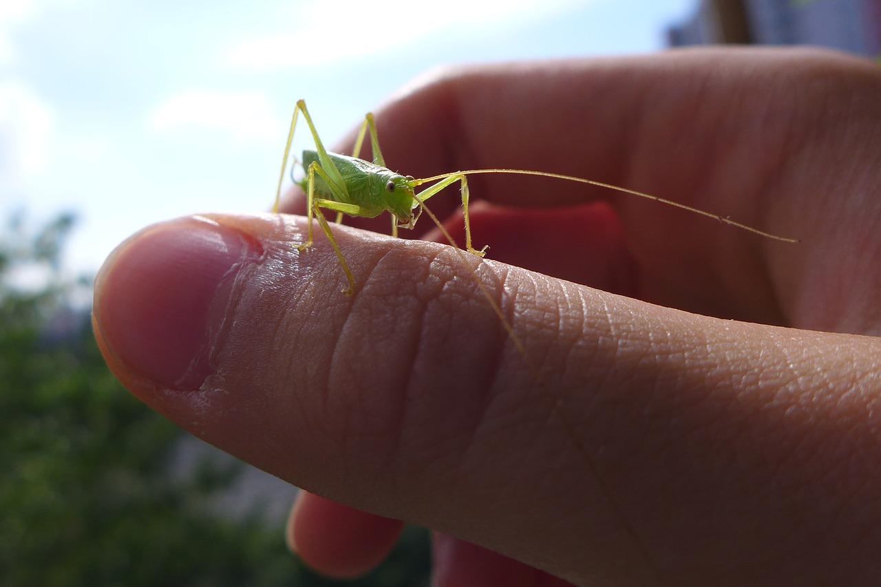 Los insectos y el hombre